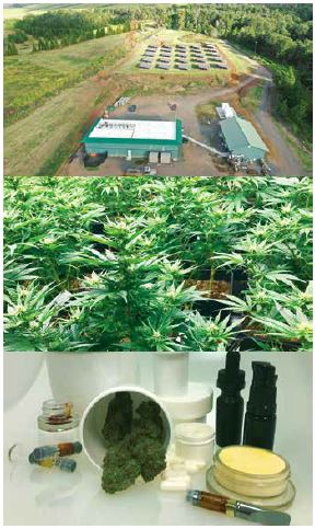 By regulation, each dispensary must produce its own products through a vertical system that starts with farming and results in uniquely formulated products.