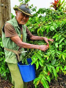 Casey Shim picking coffee on his farm.